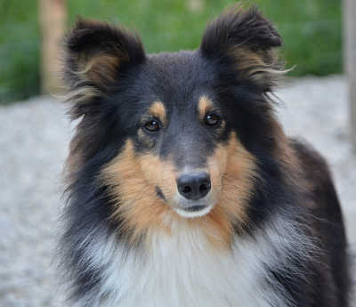 Family run dog kennels near Tickhill